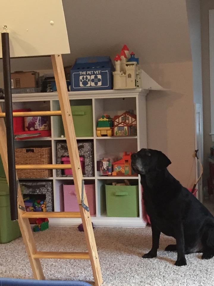 Abe ladder